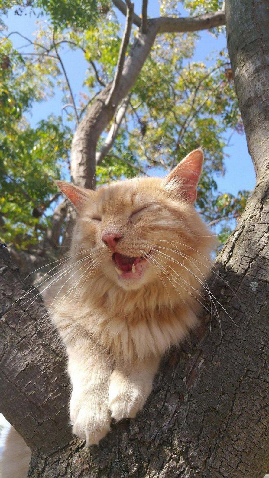 Ces oiseaux ressemblent étrangement à des chats ! By Ipnoze.com Chats-perches-dans-arbres-comme-oiseaux-21