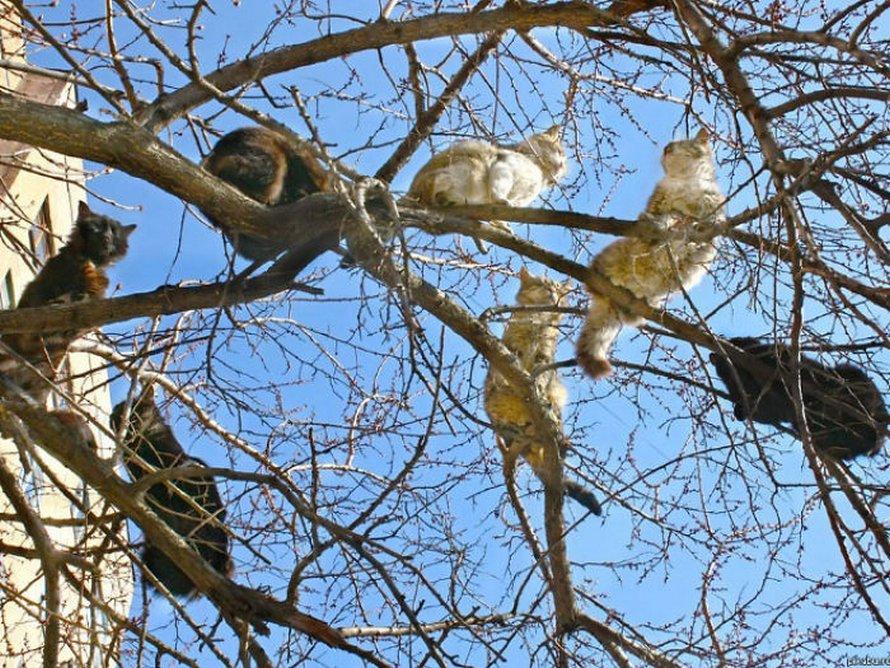 Ces oiseaux ressemblent étrangement à des chats ! By Ipnoze.com Chats-perches-dans-arbres-comme-oiseaux-22