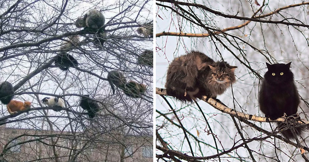 Ces oiseaux ressemblent étrangement à des chats ! By Ipnoze.com Chats-perches-dans-arbres-comme-oiseaux