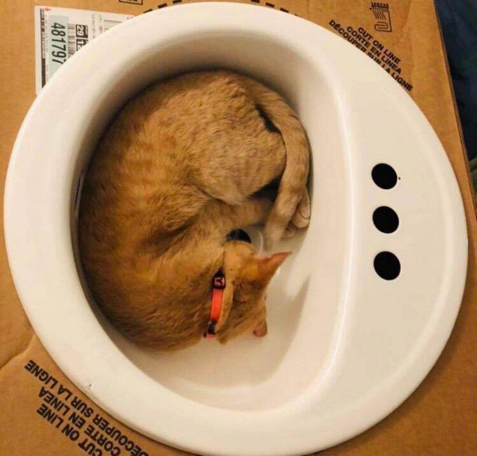 Cette chatte aime tellement les éviers que sa famille en a acheté un juste pour elle