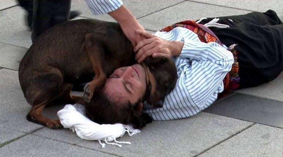 Un chien errant interrompt un spectacle pour aider un acteur qui fait semblant d'être blessé