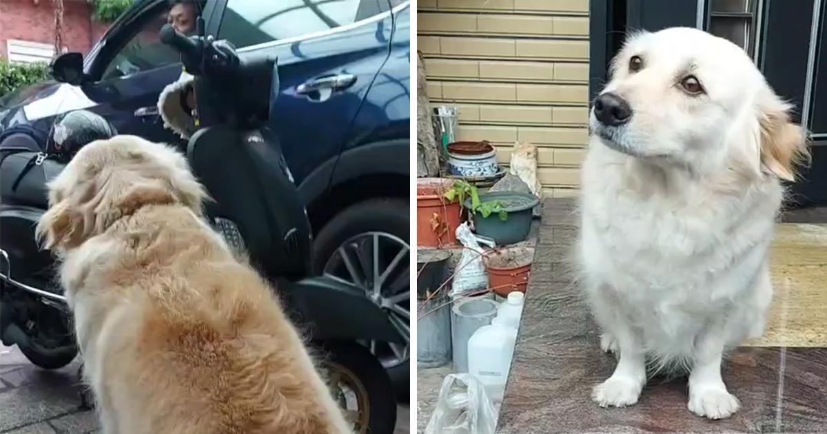 Ce chien ne veut pas que son maître aille travailler alors il lui fait des «yeux tristes» pendant 10 minutes