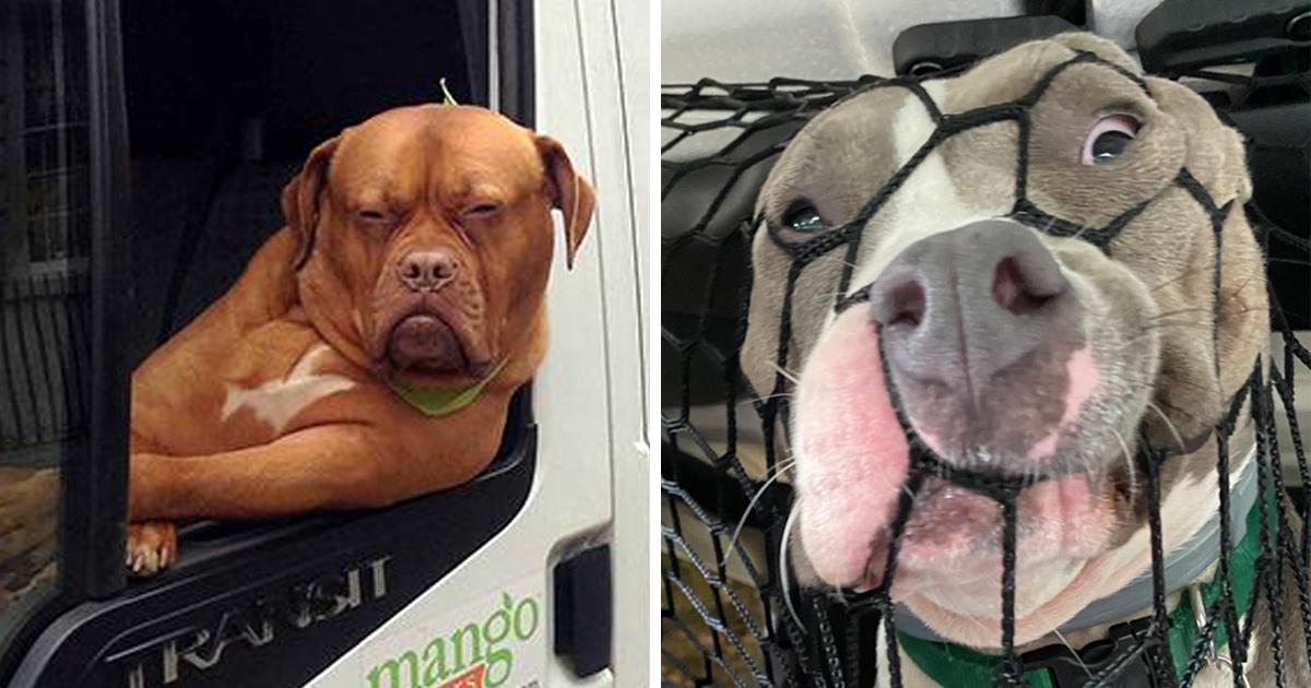 Ces chiens ont agi de manière si ridicule en voiture que leurs propriétaires n'ont pu s'empêcher de prendre un cliché