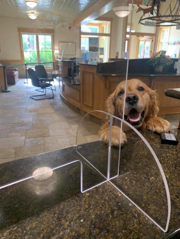 Des gens partagent les meilleures rencontres inattendues avec des chiens