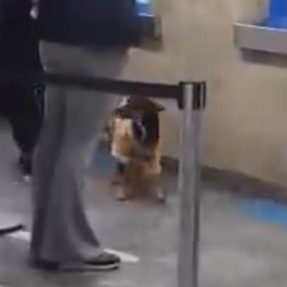 Cet homme a enlevé sa chemise et l'a donnée à un chien errant grelotant