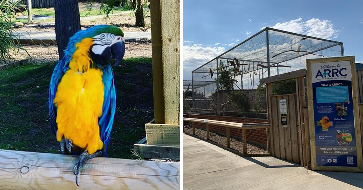 Des perroquets ont dû être retirés d'un parc animalier lorsqu'ils ont commencé à insulter les visiteurs