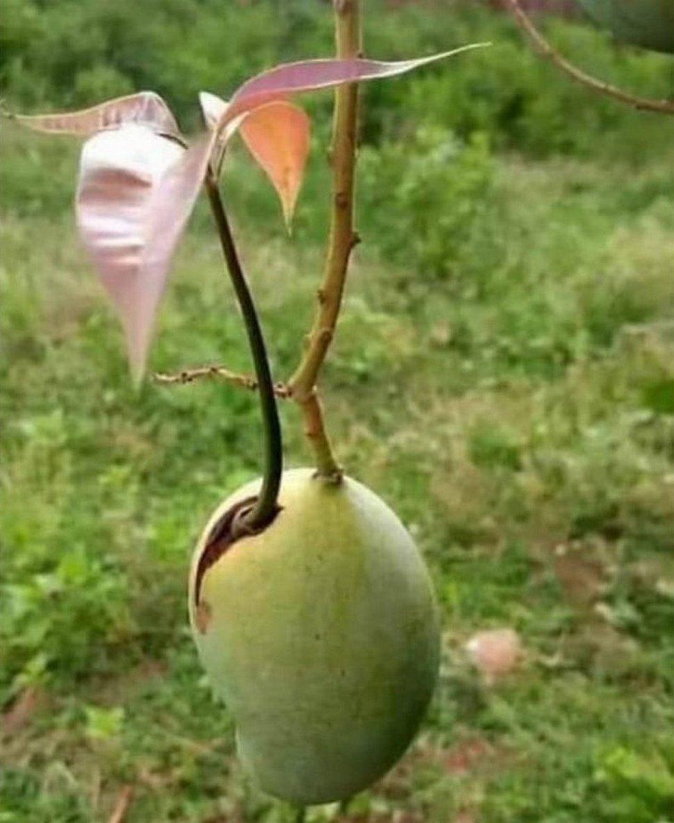 Des gens ont aperçu des plantes «vivipares» et ont décidé de partager ces images cauchemardesques