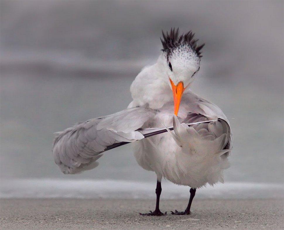 Les photos d'animaux sauvages les plus drôles de 2020 viennent tout juste d'être dévoilées et elles vont te faire rigoler