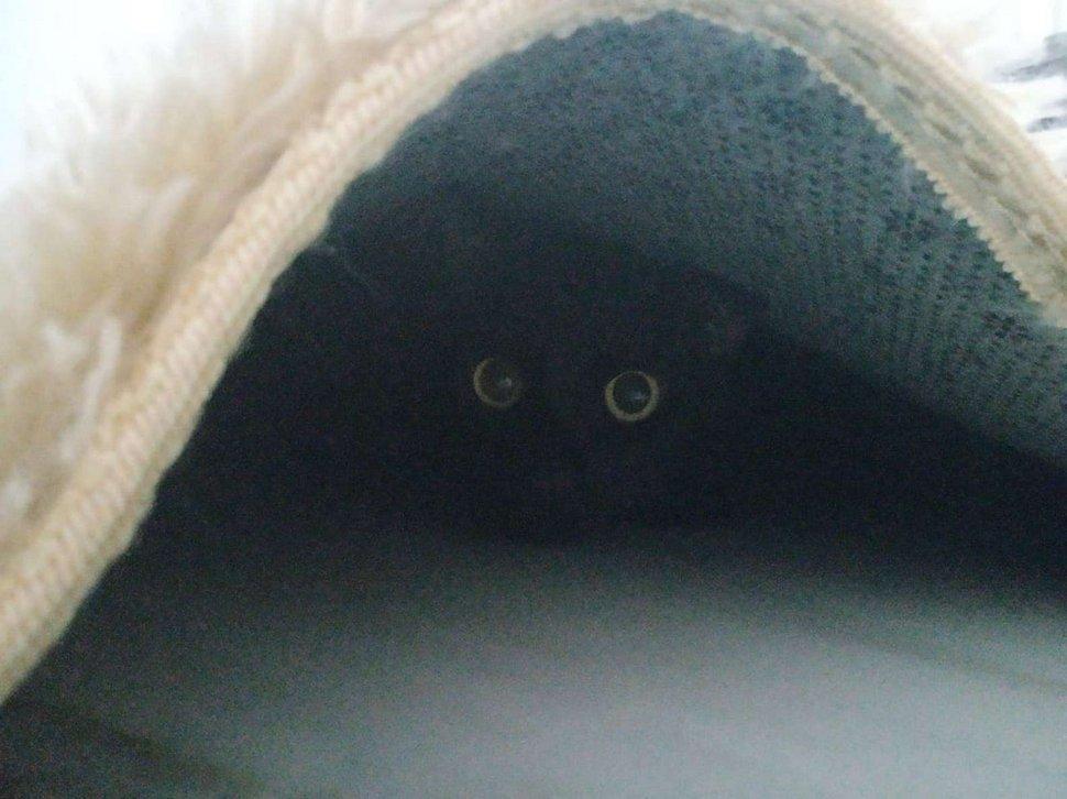 Les gens ont du mal à trouver le chat en 10 secondes sur cette photo