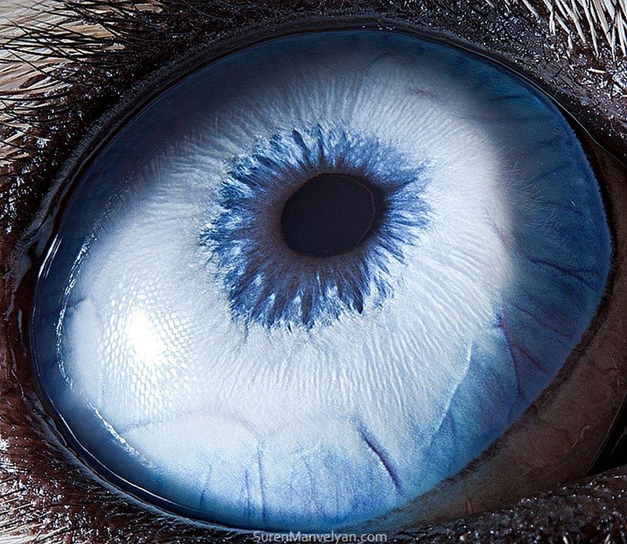 Ce photographe capture la beauté ensorcelante des yeux d'animaux