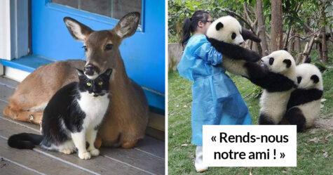 Si tu penses que le monde est terrible, ces 22 amitiés improbables entre animaux pourraient te faire changer d'avis