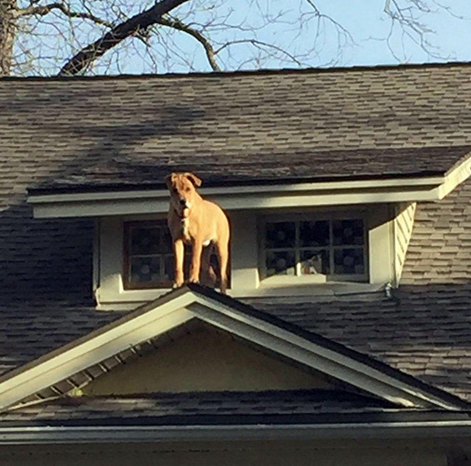 22 animaux de compagnie qui ont involontairement fait paniquer leurs propriétaires