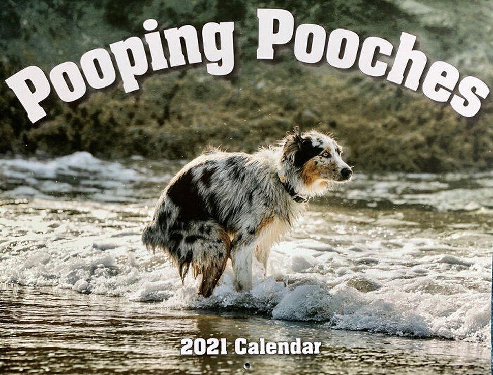 Le calendrier des chiens qui font caca 2021 est enfin arrivé et l'édition de cette année comprend même un puzzle