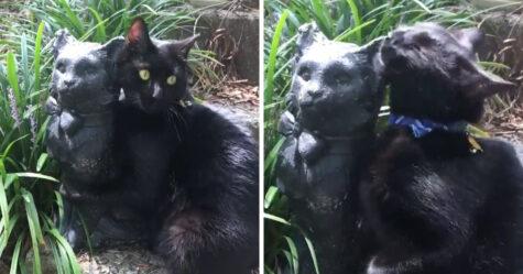 Un chat tombe amoureux d'une statue qui lui ressemble
