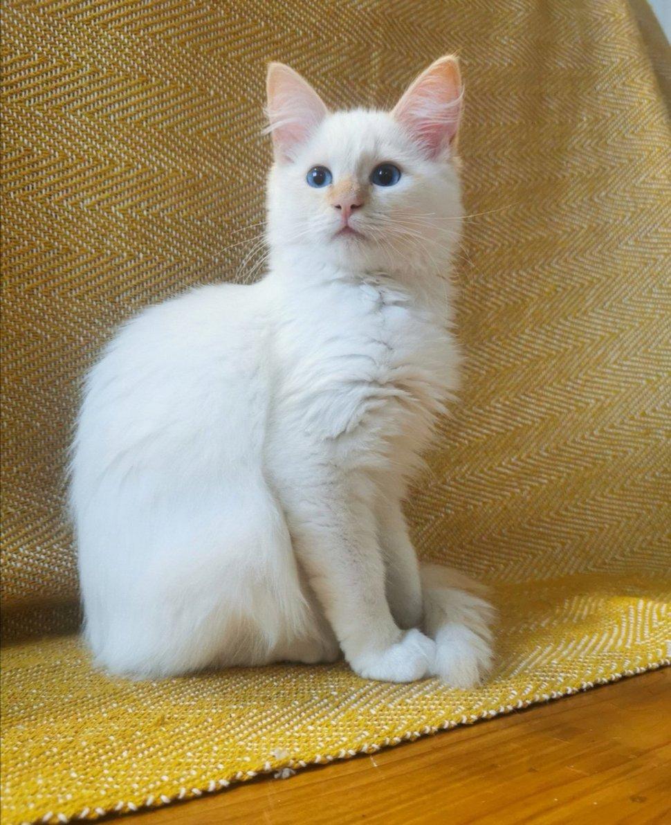 Les gens sont tombés amoureux de ce chat pelucheux perché sur les nuages comme un dieu