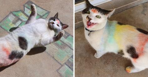 Des chats voient un dessin à la craie et décident de montrer leurs talents d'artistes à leurs humains