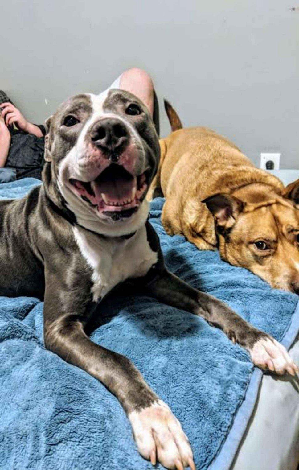Une famille abandonne son chien dans un refuge parce que «nous allons avoir un autre bébé»