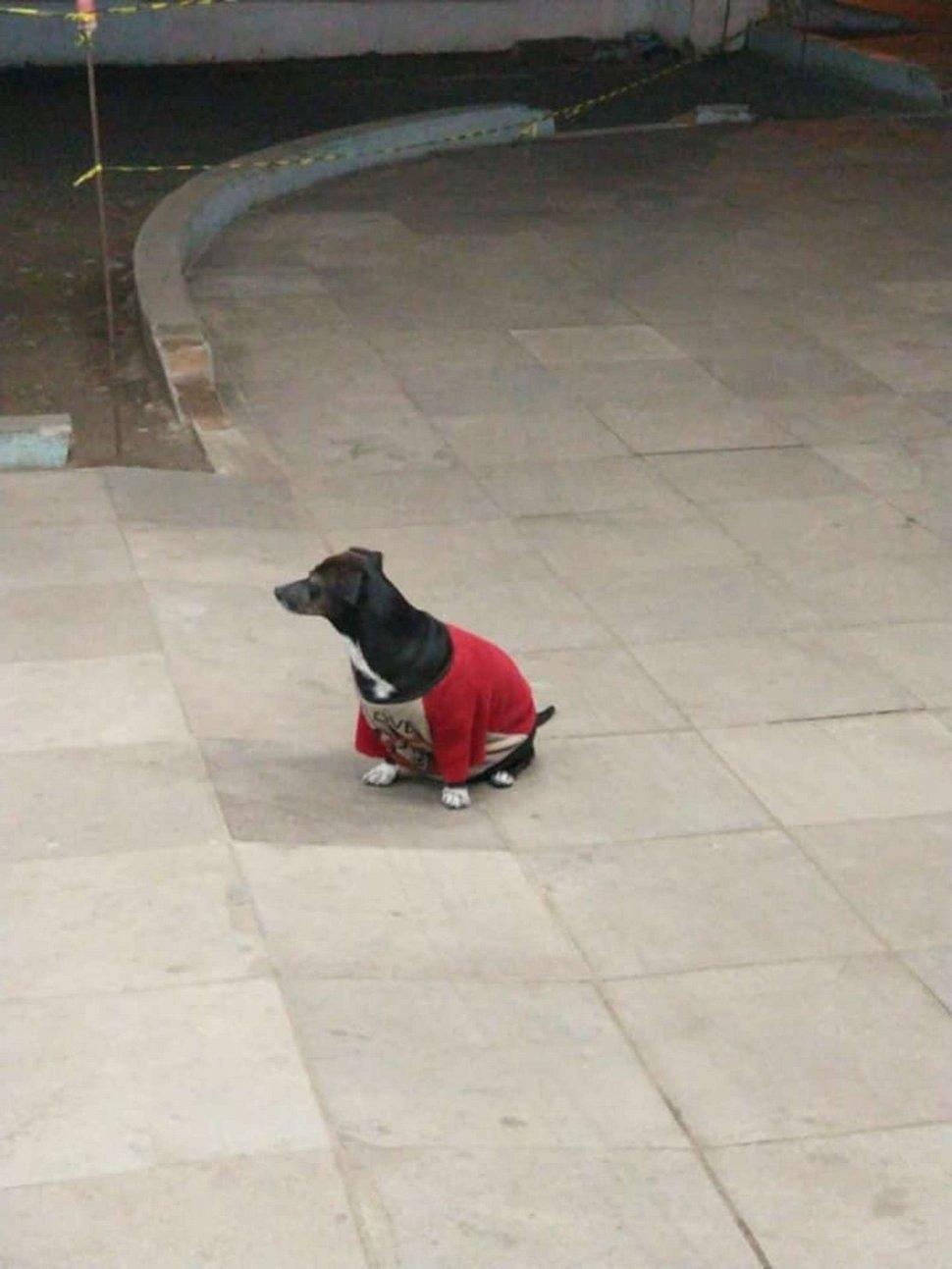 https://www.ipnoze.com/wordpress/wp-content/uploads/2020/10/chien-ambulance-suit-maitre-hopital-anderson-bahi-004.jpg