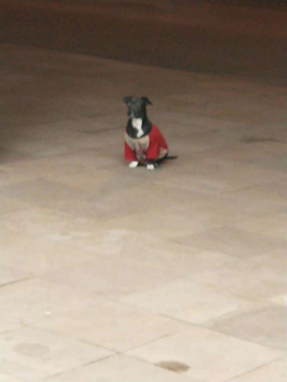https://www.ipnoze.com/wordpress/wp-content/uploads/2020/10/chien-ambulance-suit-maitre-hopital-anderson-bahi-005.jpg