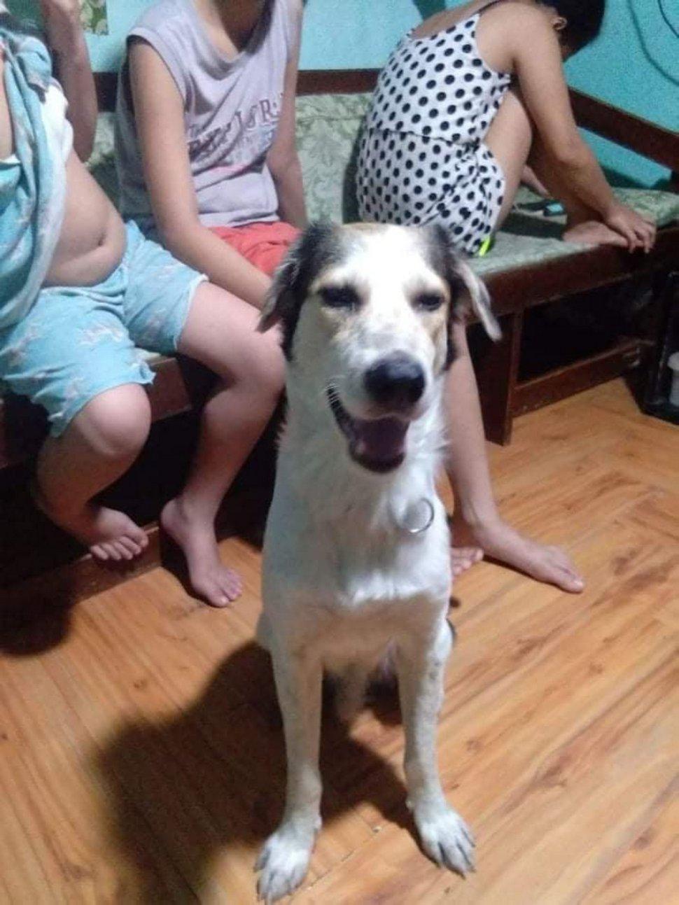 Ce chien qui avait disparu pendant des mois s'est mis à pleurer quand son propriétaire l'a enfin retrouvé