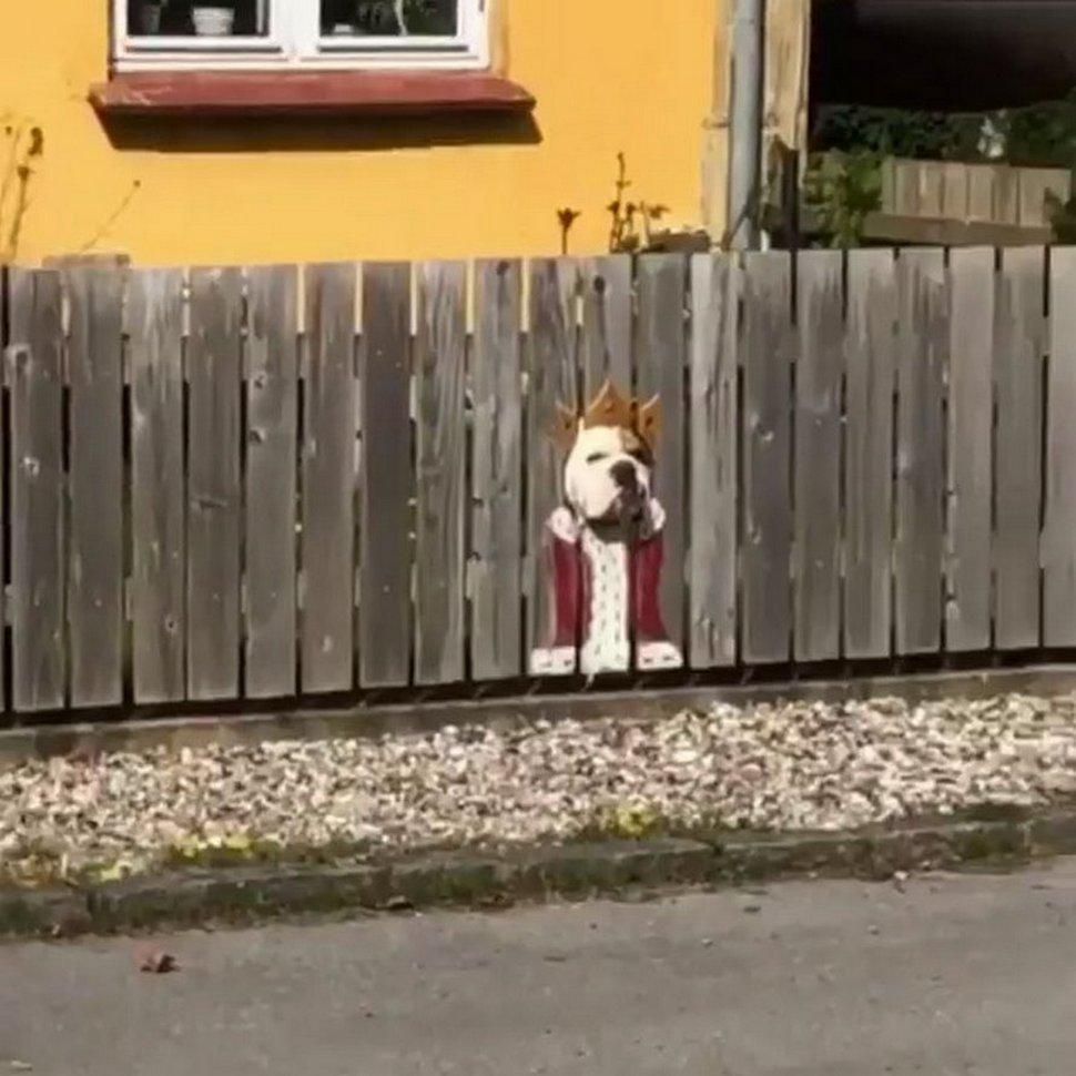 Une propriétaire d'animaux de compagnie découpe des trous dans une clôture pour que ses chiens puissent espionner les voisins