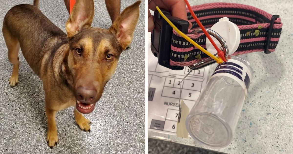 Des gens trouvent une chienne avec un message dans une bouteille attachée à son collier
