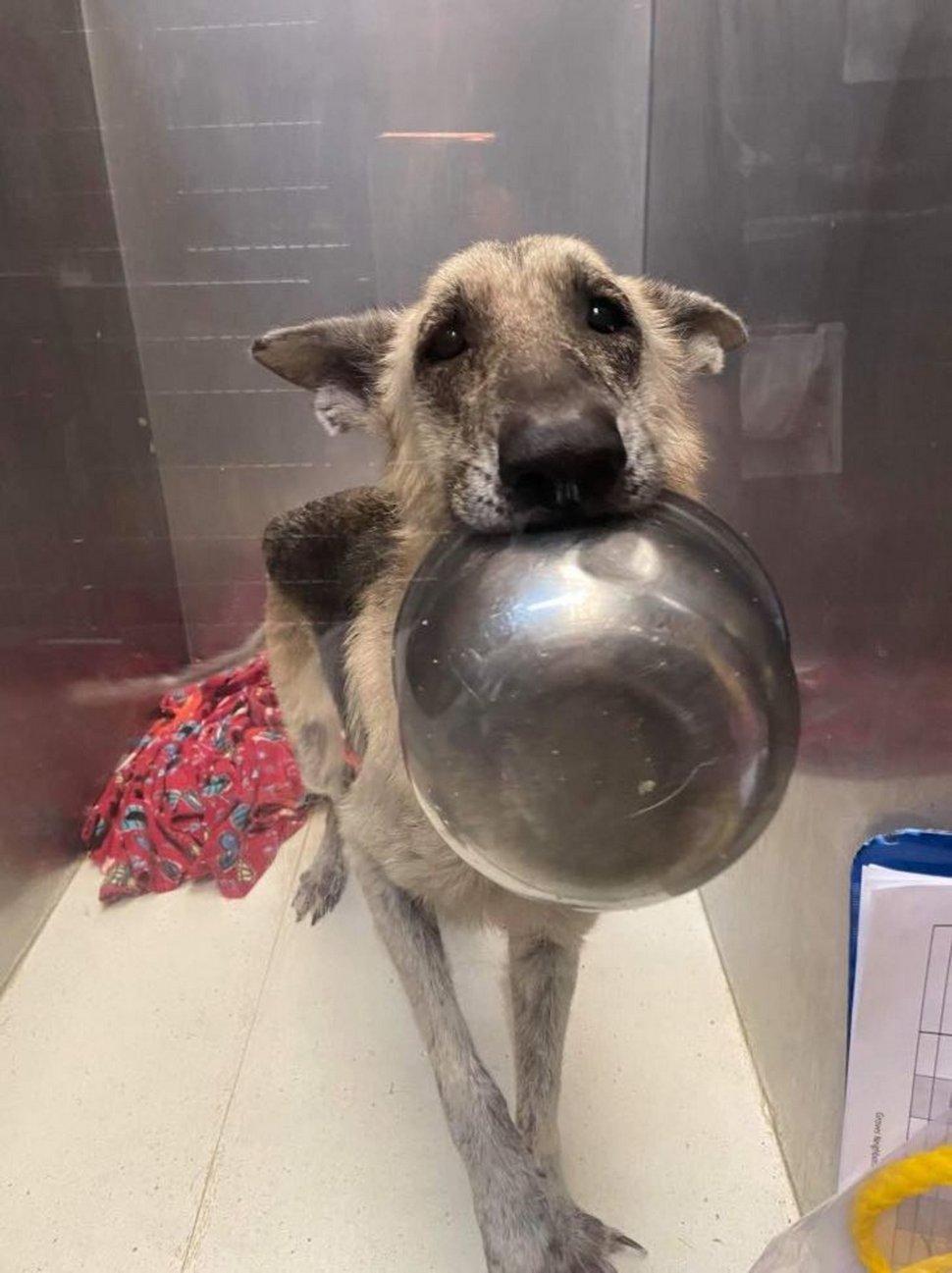 Cette chienne secourue a trouvé un truc adorable pour se faire remarquer