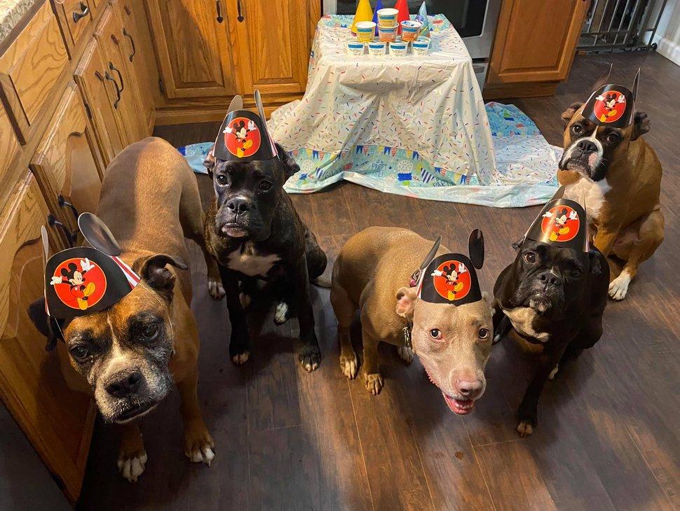 Ces chiens ont participé à la fête d'anniversaire la plus cool de tous les temps