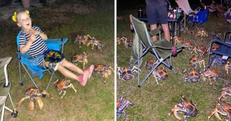 Une marée de crabes géants s'invite au pique-nique d'une famille