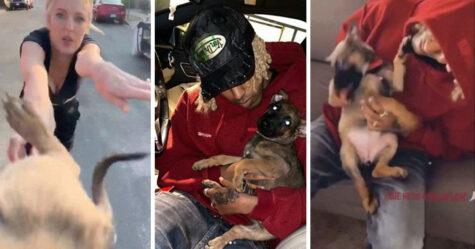 Un homme sauve et adopte un chiot qui a été jeté sur lui par une femme lors d'une agression raciste