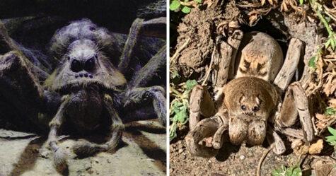 Un homme trouve une araignée dans son jardin qui «ressemble à Aragog» dans Harry Potter