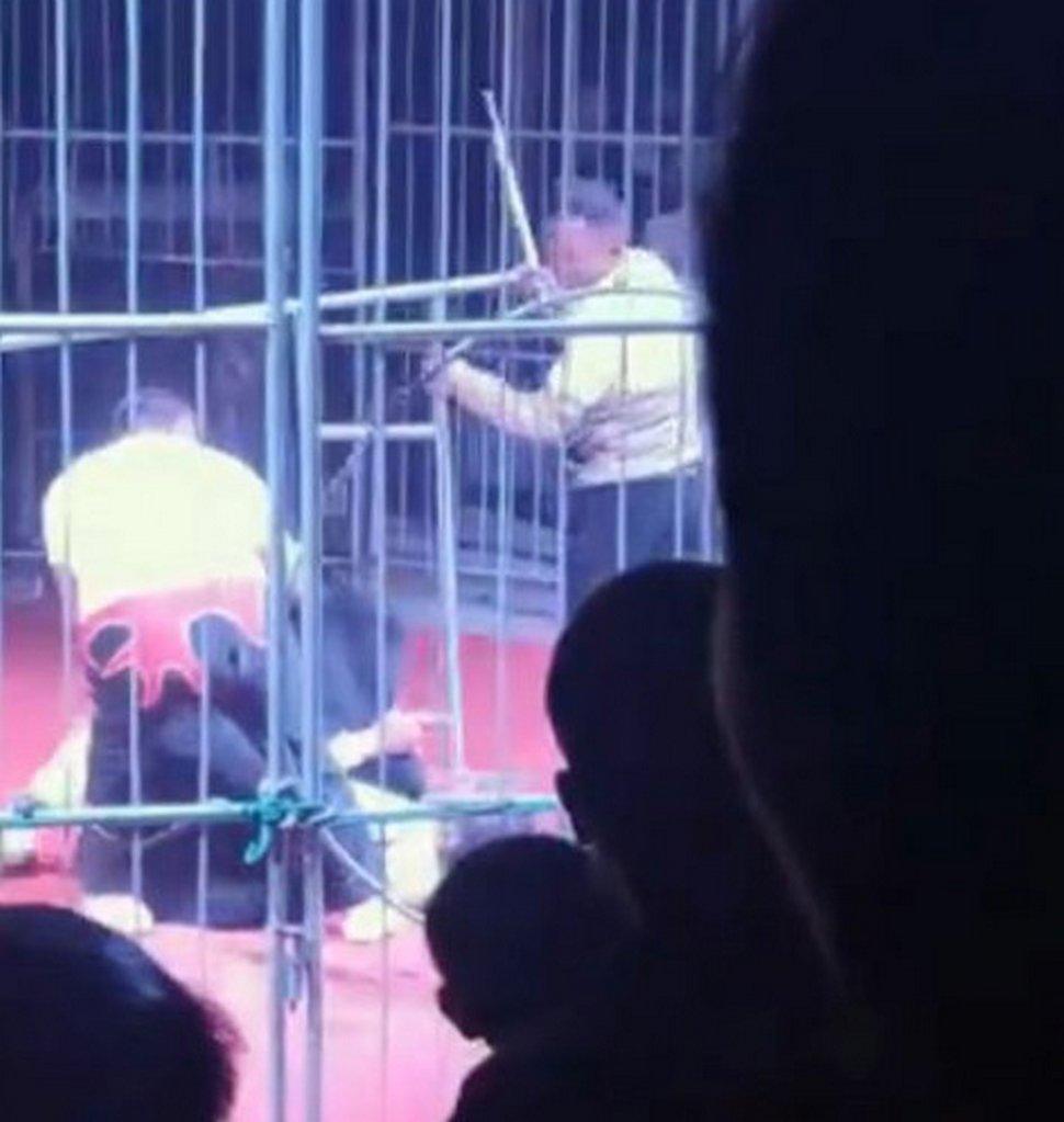 Un ours attaque un dresseur de cirque devant le public alors que ses collègues se battent pour le sauver
