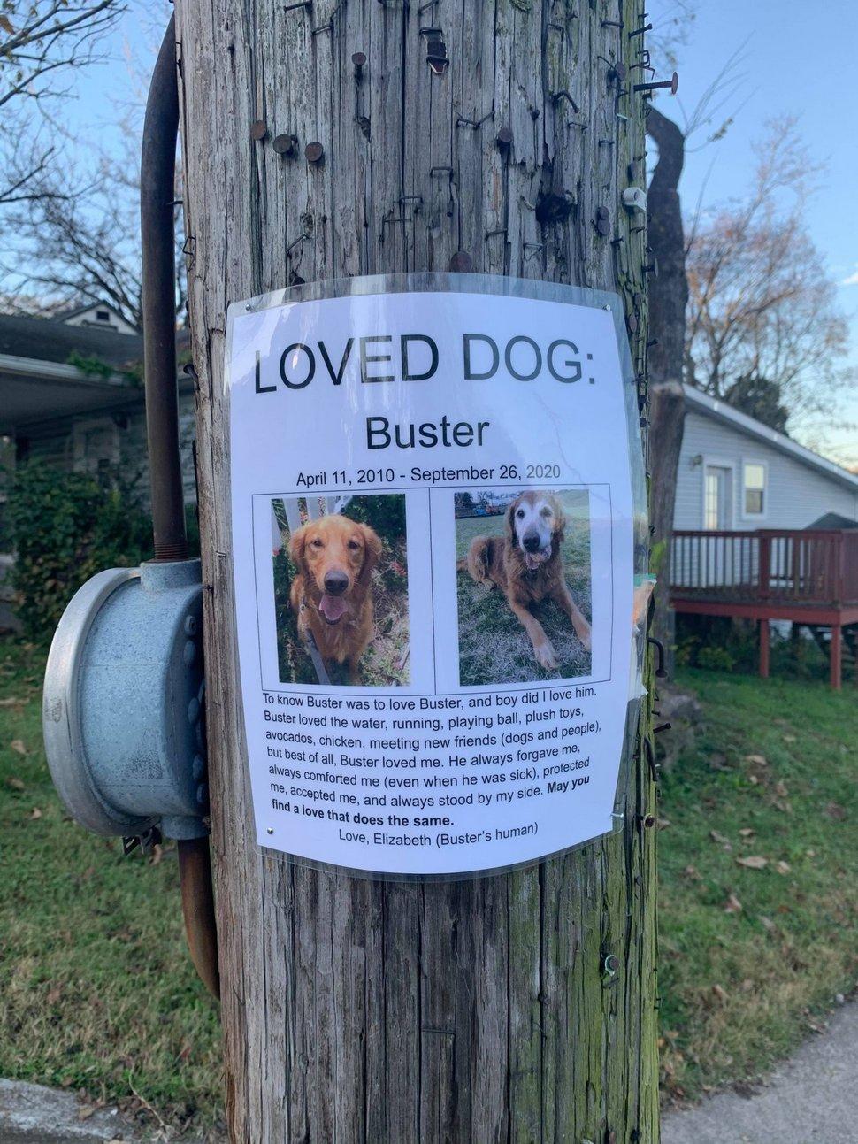 Une femme trouve la plus belle affiche de «chien perdu» qu'elle a jamais vue