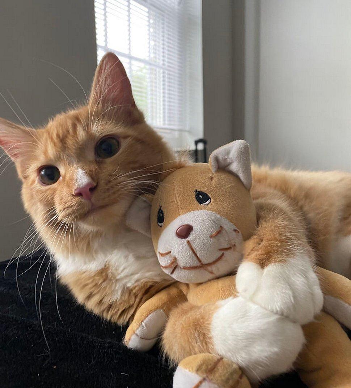 22 photos d'animaux de compagnie qui refusent de se séparer de leurs jouets préférés