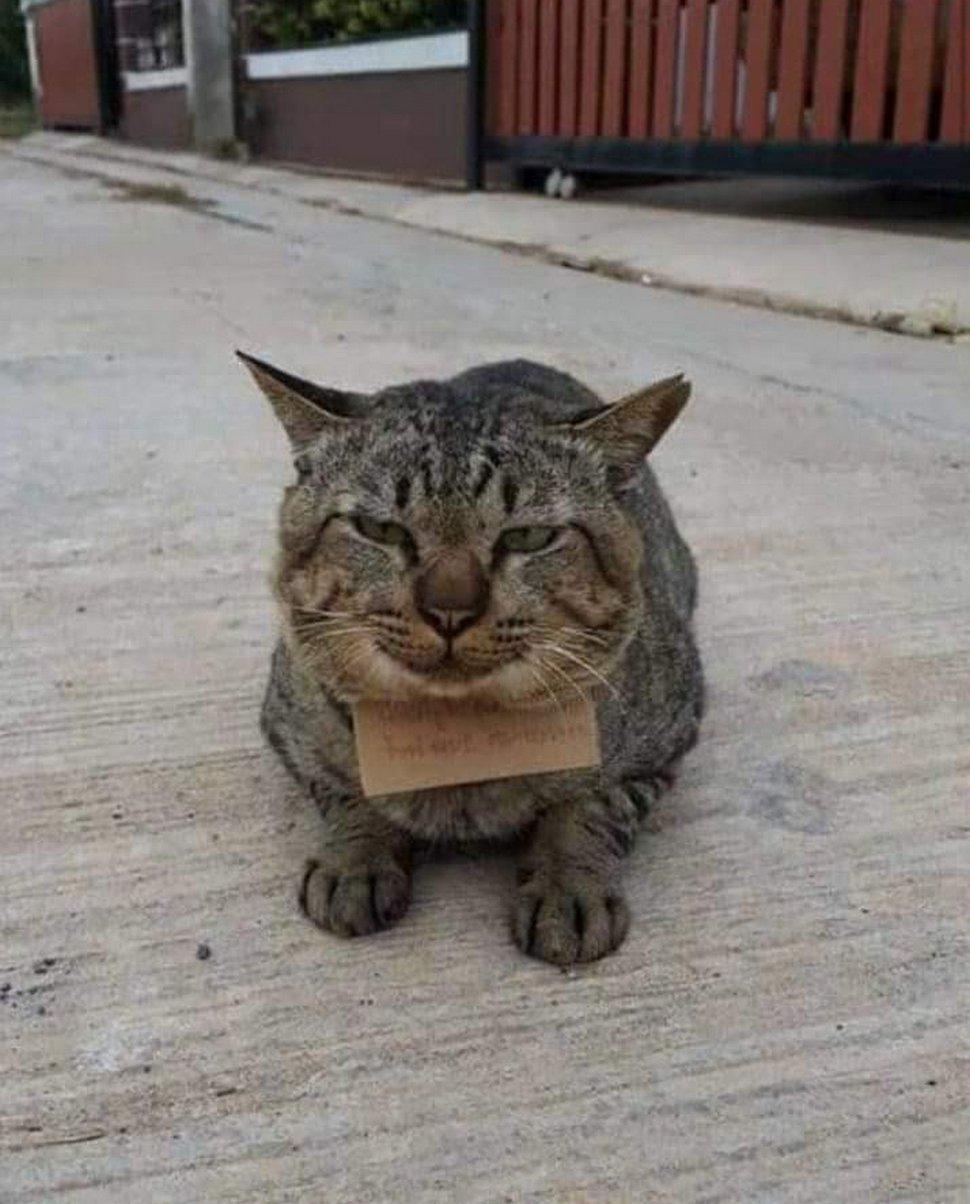 Un chat part à l'aventure et rentre chez lui avec une note autour du cou