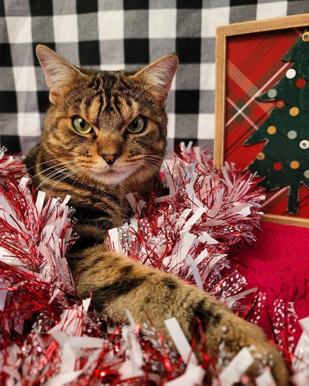 Ce chat secouru qui a l'air fâché en permanence est en fait un vrai petit ange