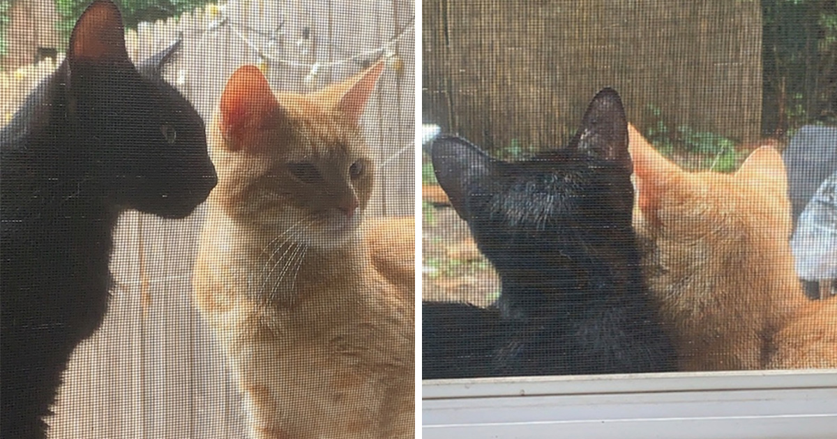 Un couple de chats demande qu'on le laisse entrer pour donner naissance à ses bébés