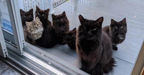 Cette chatte errante a présenté tous ses chatons à la femme qui l'a aidée