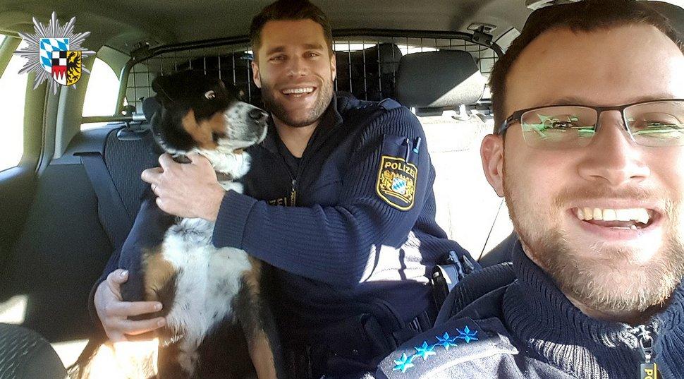 Ce chien qui s'est échappé de chez lui ne peut pas croire qu'il vient d'être «arrêté» par la police