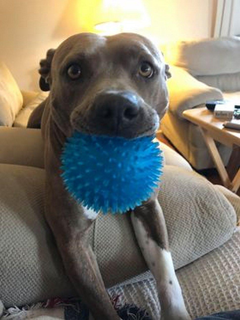 Ce chien n'arrive pas à croire que son père l'a enfin retrouvé après 200 jours de séparation