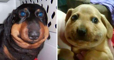 22 gentils chiens qui ont appris à la dure qu'il ne faut jamais embêter les abeilles