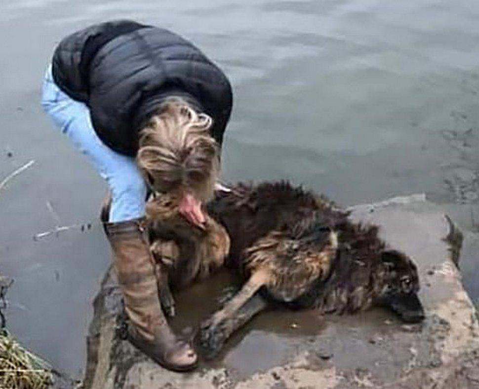 Une femme sauve une chienne qui a été attachée à une pierre et jetée dans une rivière gelée par sa propriétaire