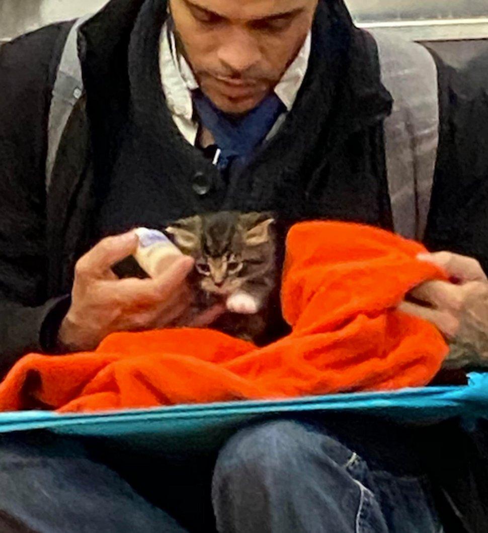Un homme vu avec un minuscule chaton dans le métro redonne confiance aux gens en l'humanité ! Par Janvier Doyon Homme-avec-chaton-metro-gillian-rogers-002