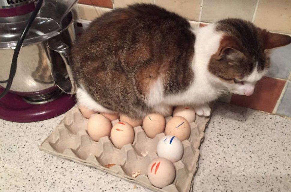 22 exemples amusants de lits de chats et de logique de chats