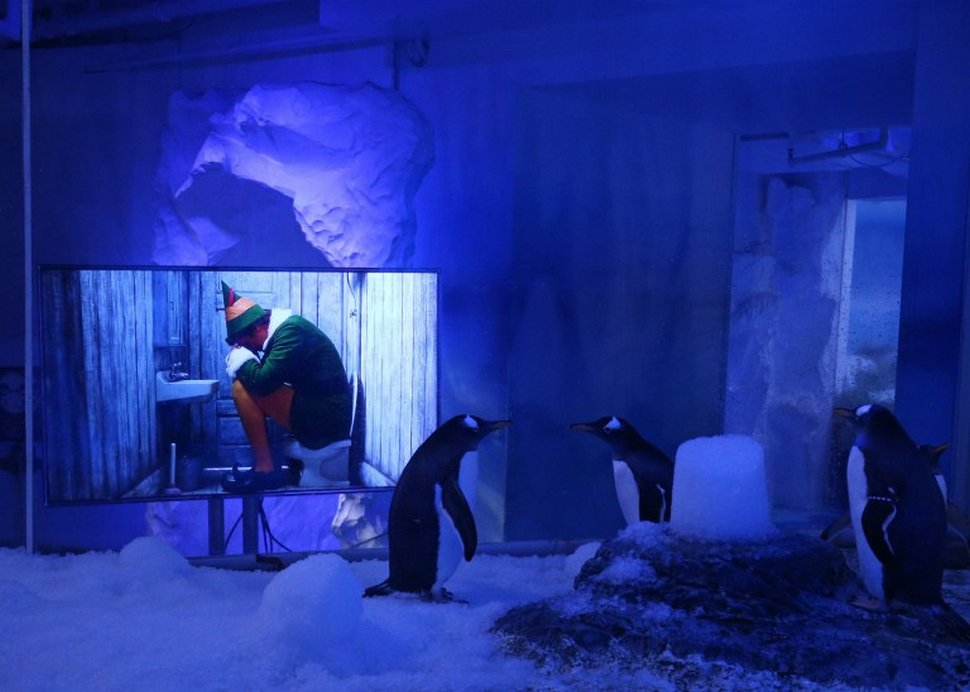 Les manchots de l'Aquarium de Londres ont pu regarder des films de Noël pendant le confinement