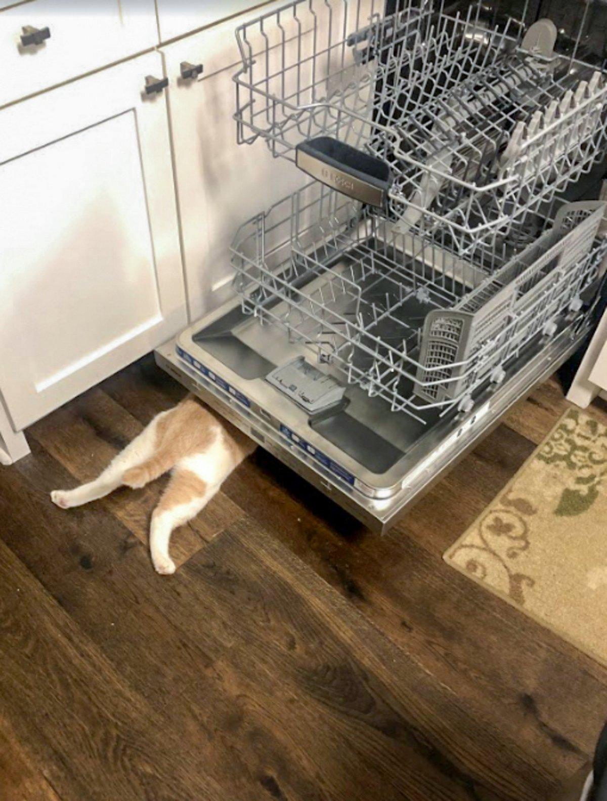 Ce chat est convaincu que personne ne peut le voir quand il se cache