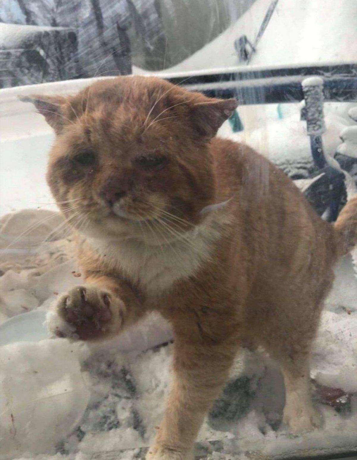 Un chat errant grelottant frappe à la porte d'une femme pour lui demander de le laisser entrer