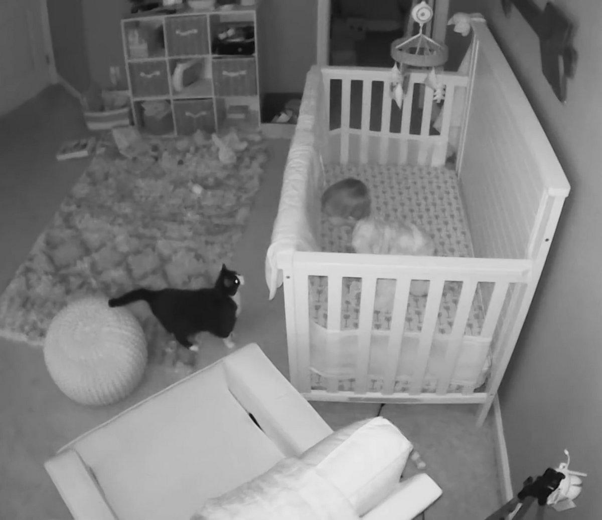 Cette chatte et ce bébé ont été surpris en pleine conversation grâce à une caméra de sécurité
