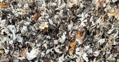 Cette chatte se fond complètement dans ce tas de feuilles