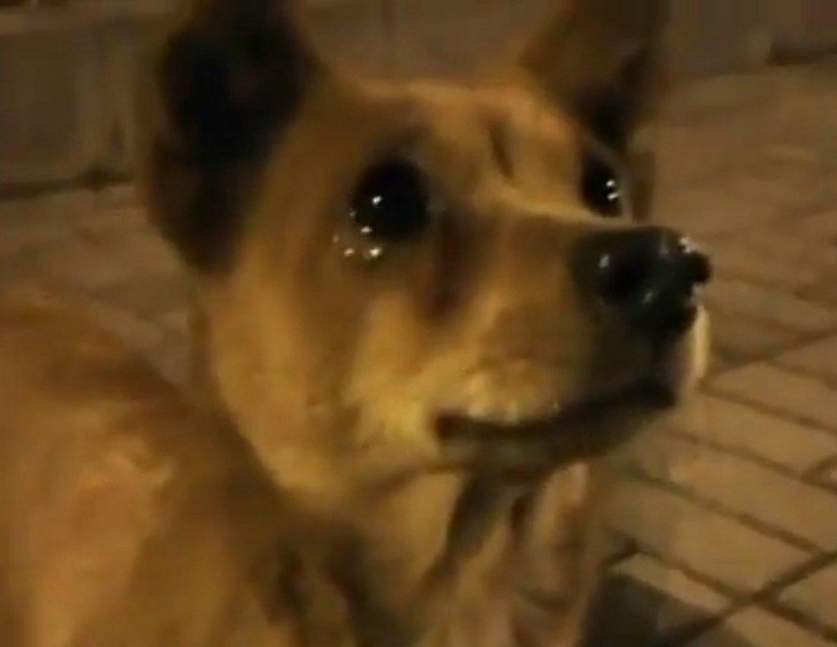 Un chien errant pleure de joie après avoir été nourri dans la rue par une gentille inconnue